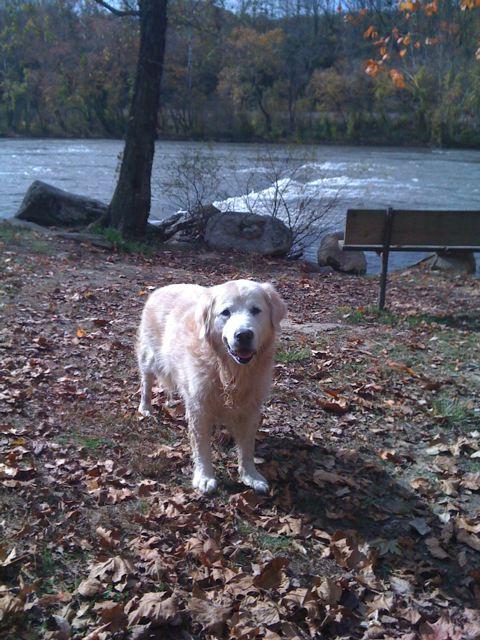 Riley at the river