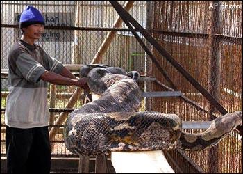 snake.jpeg