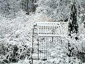 snowy_garden.jpeg