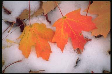 Autumn_snow