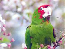 Parrot3_1