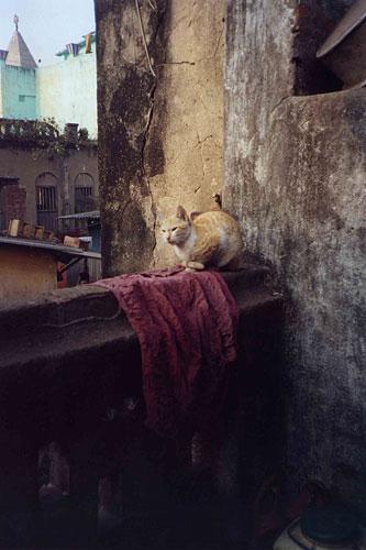 Suchitra_cat